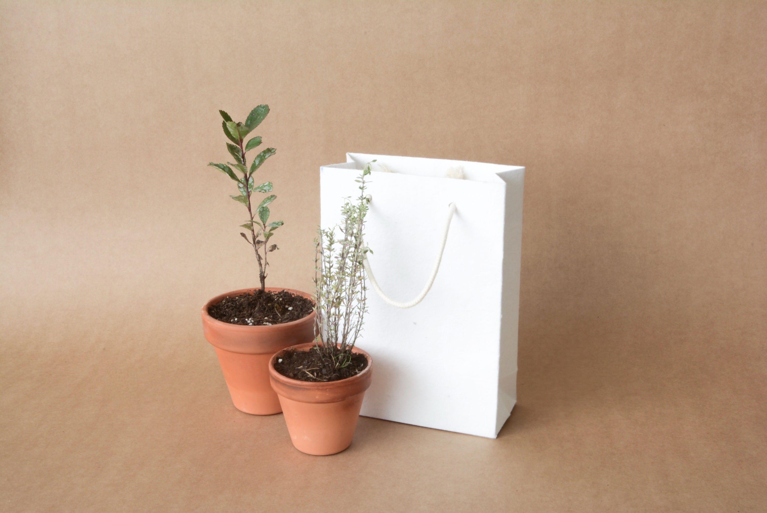 bolsa plantable