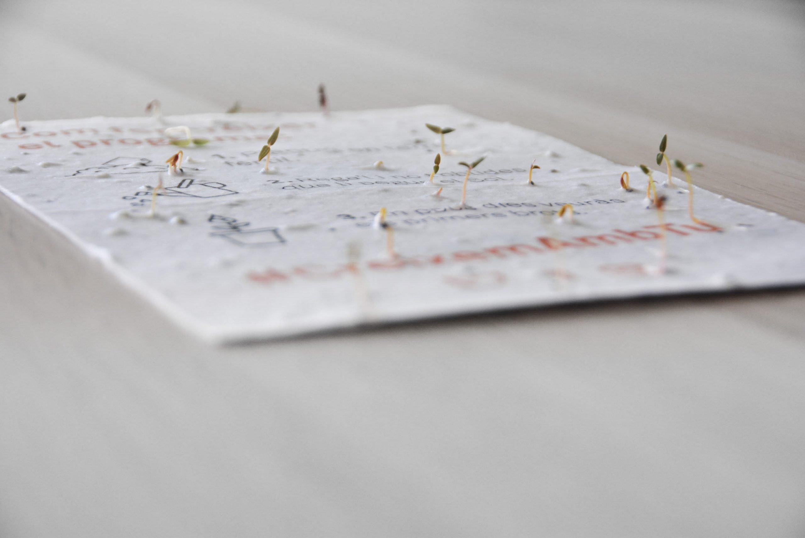 papel con semillas plantable