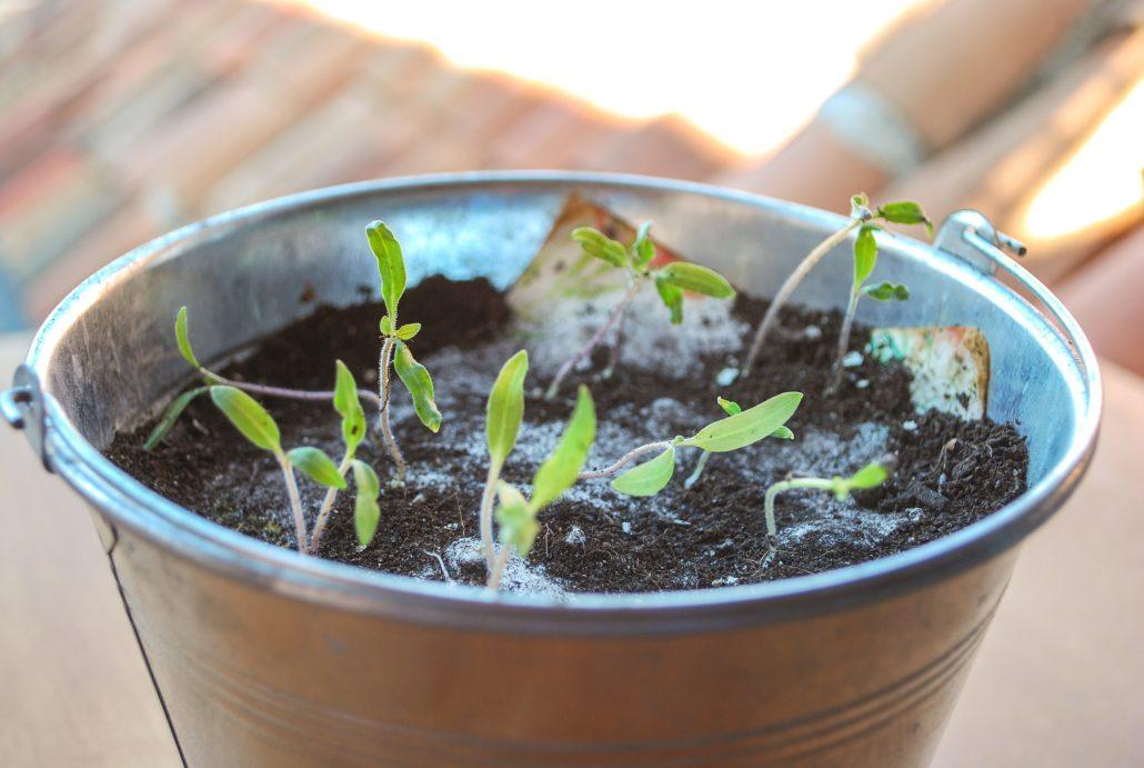 papel de semillas plantable