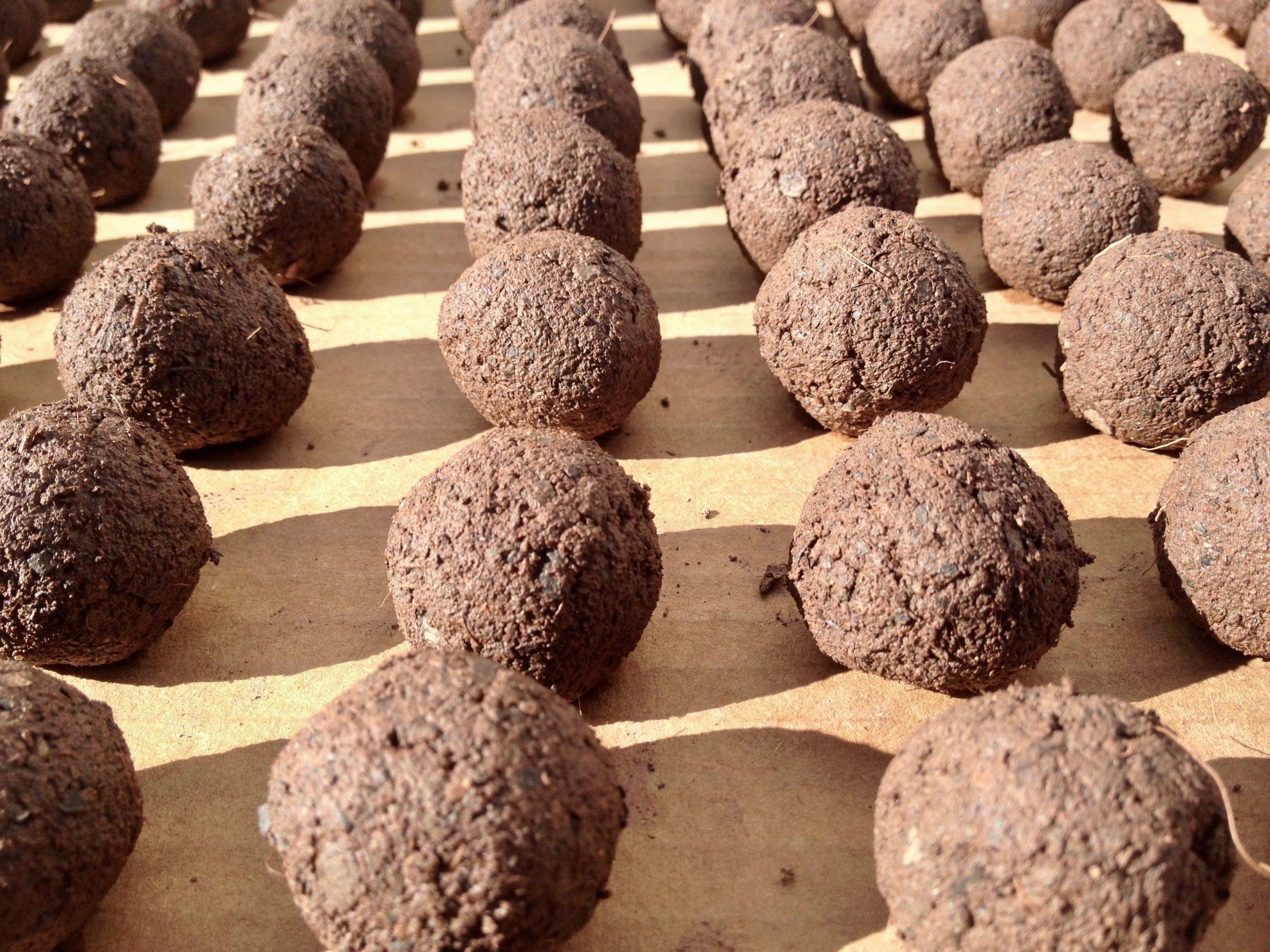 regalo de empresa plantable fabricacion bomba de semillas