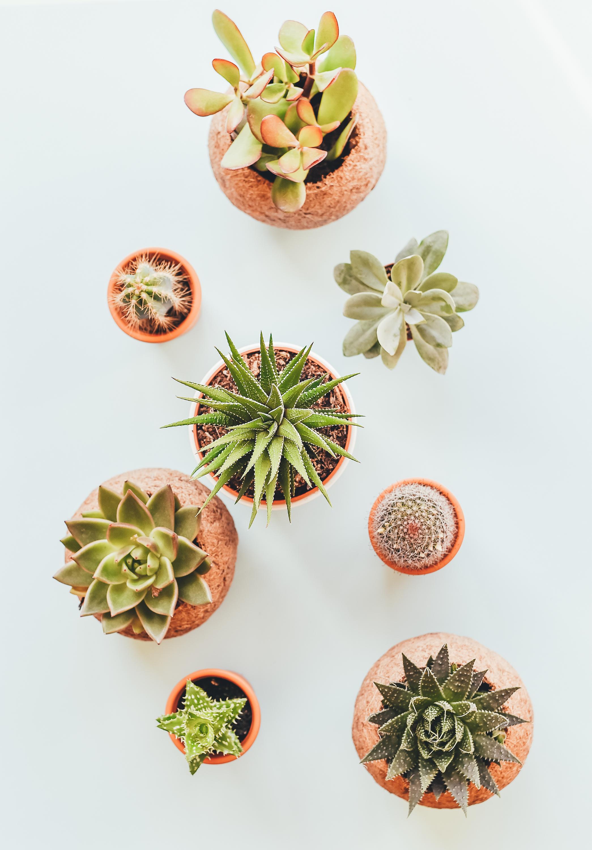 ¿Qué pasa con los cactus?