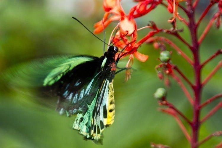 10 consejos para cuidar tu jardín y tenerlo a punto