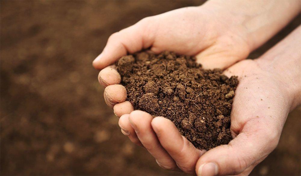 como cuidar tu jardin