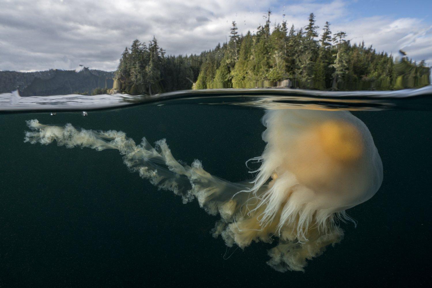 Sea Legacy: contando historias del océano