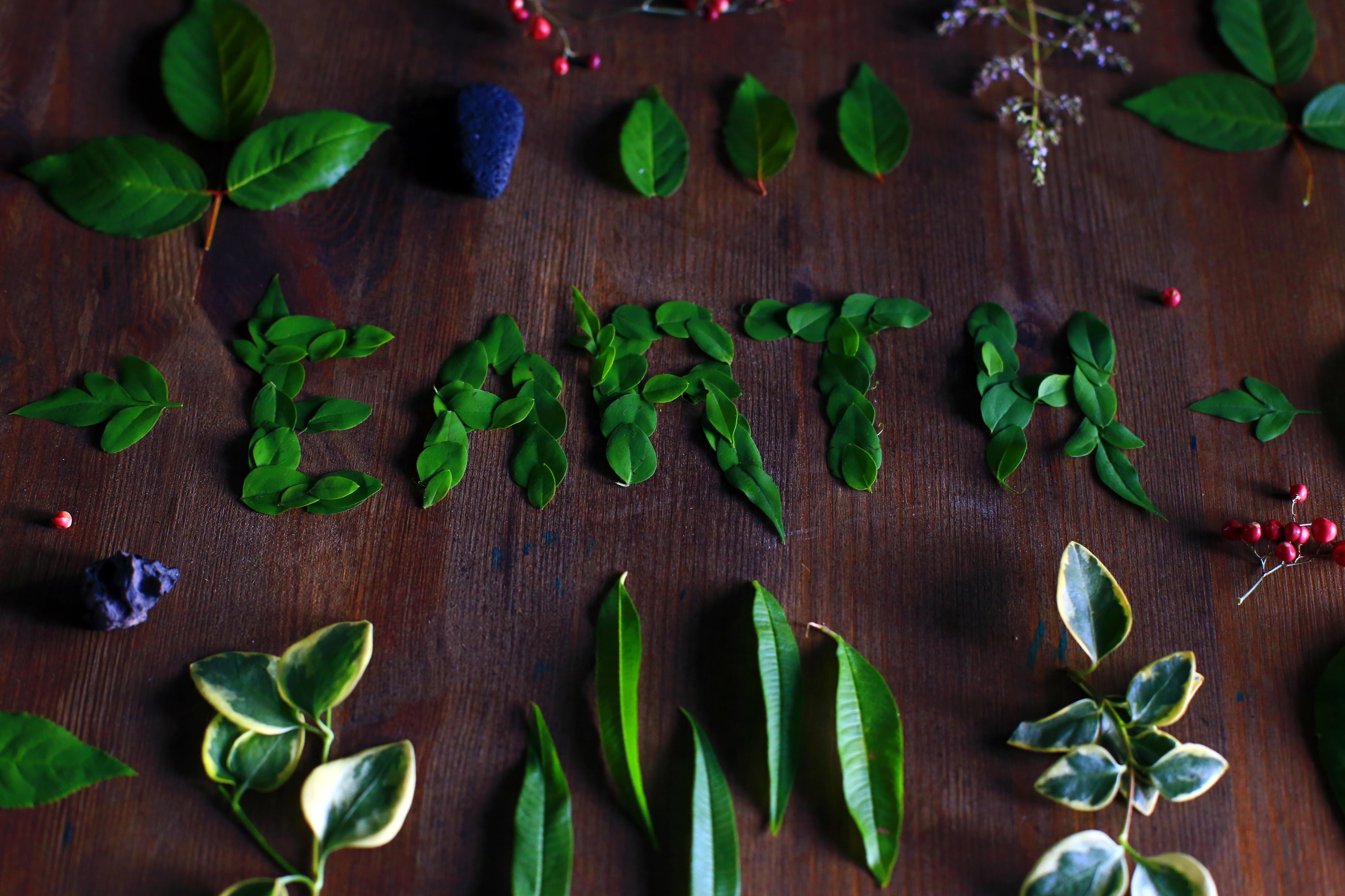 Día Mundial del Medio Ambiente papel semillas