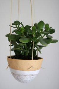 plantas de oficina regalos empresa sostenibles