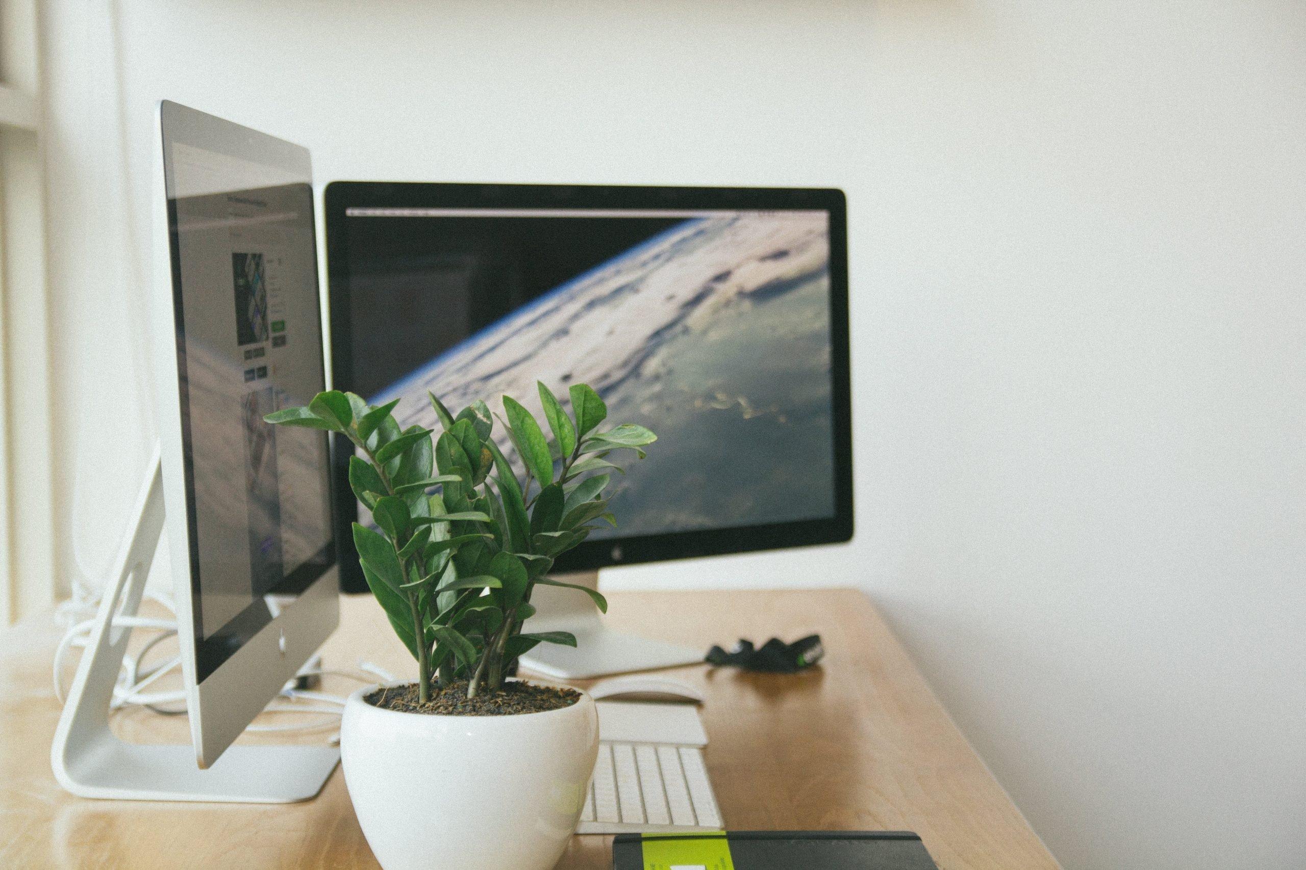 6 ideas para regalar plantas de oficina