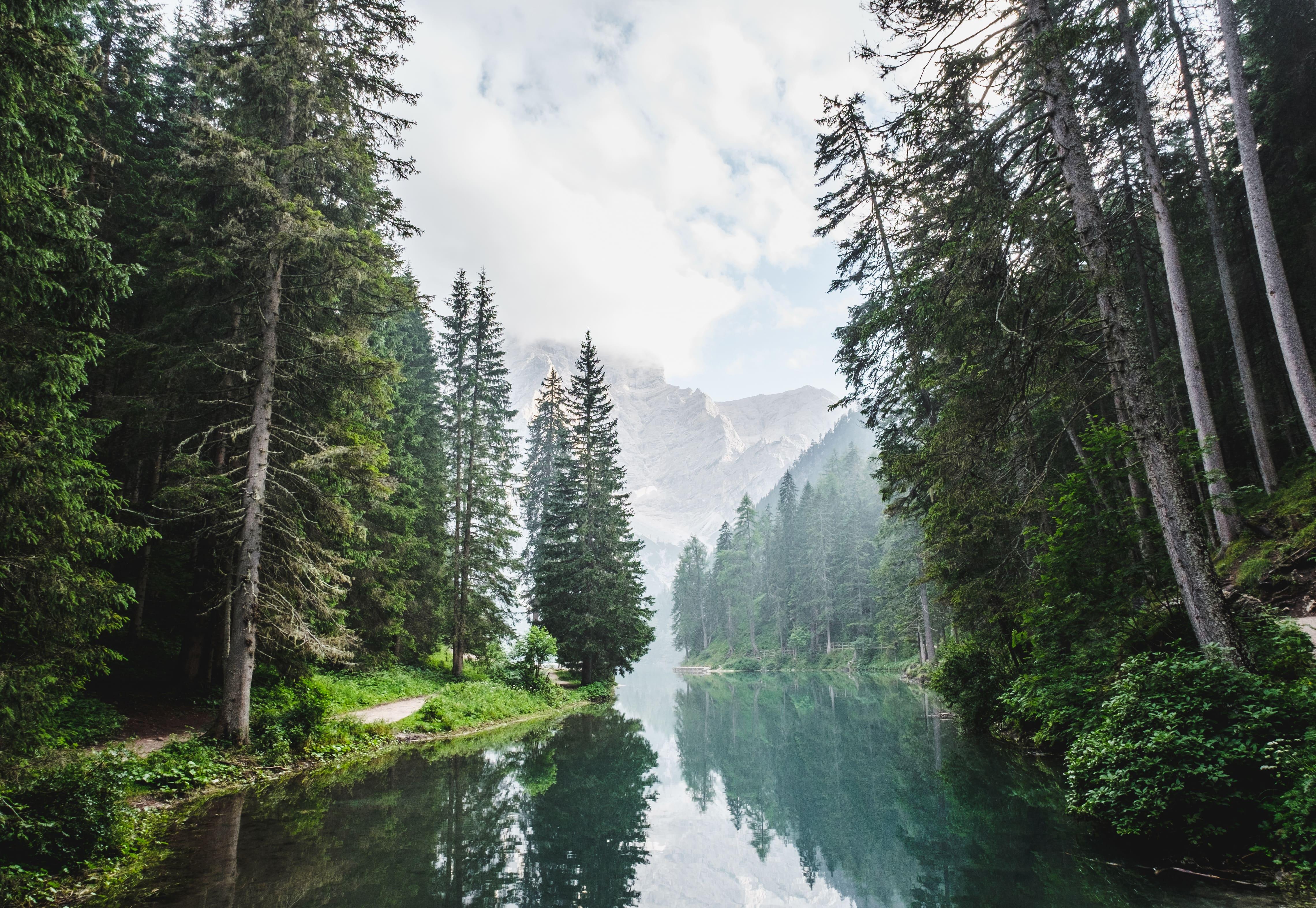 ¿Por qué son tan importantes los árboles?