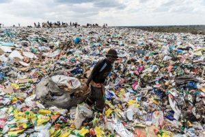 bolsas que salvan planeta bolsa semillas