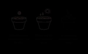 instrucciones plantar bombon semillas regalo empresa sostenible