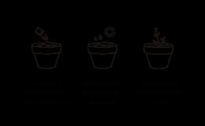 instrucciones plantado kit para plantar