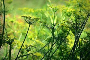 papel semillas plantable anis