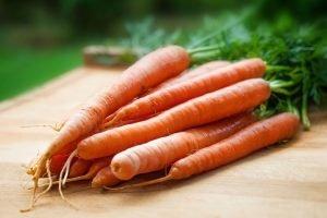 papel de semillas plantable zanahoria