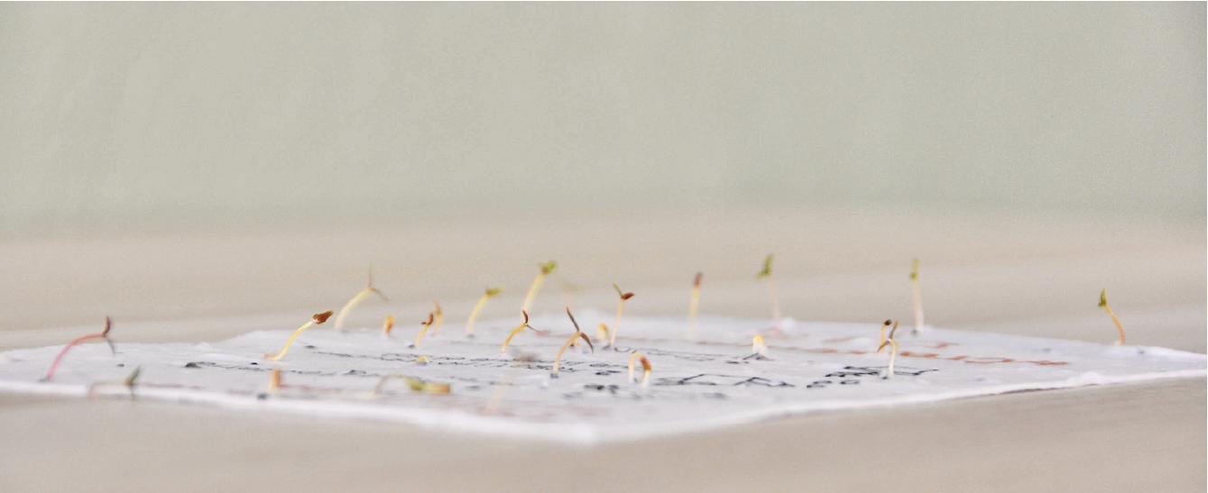 papel con semillas