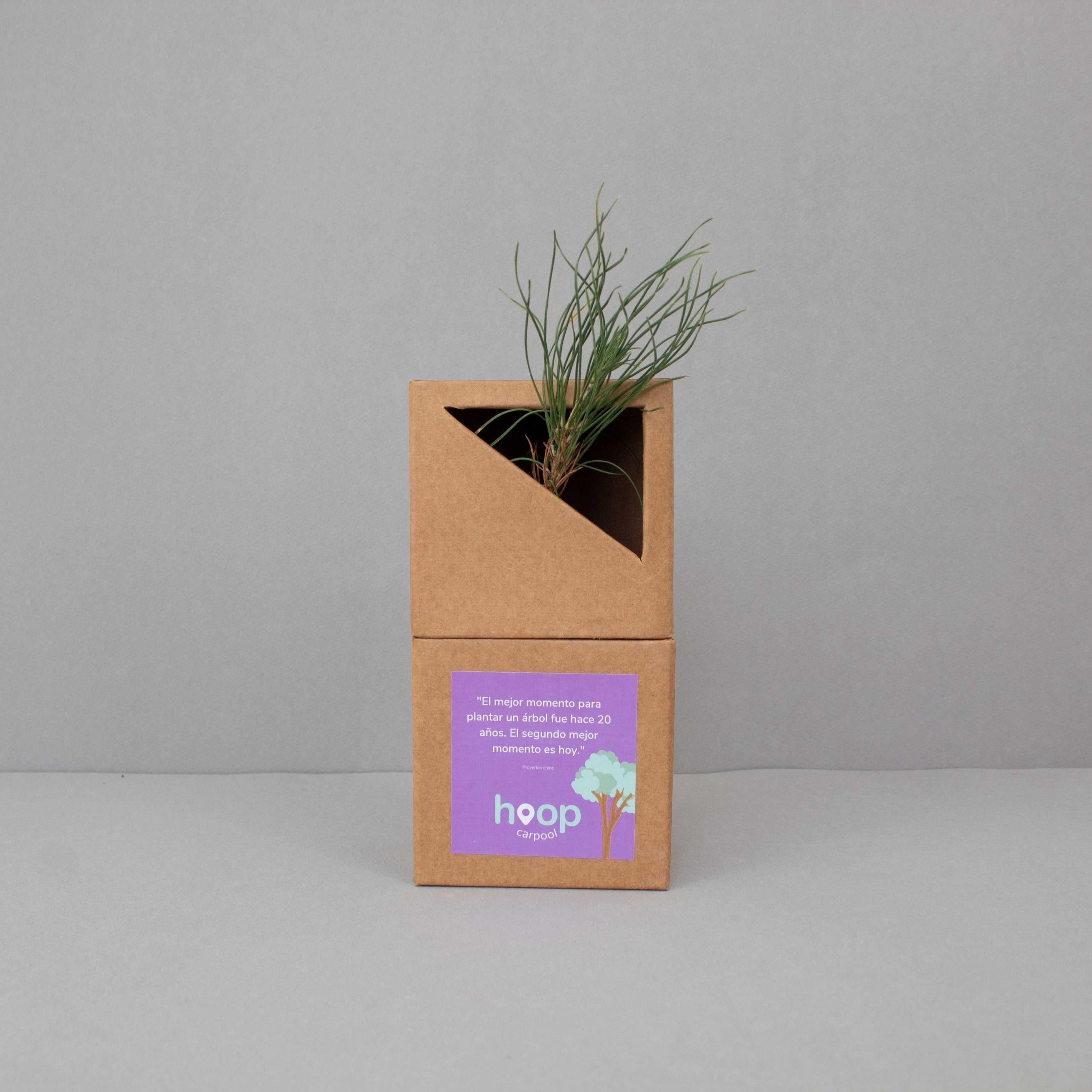 Arbolito regalo ecologico
