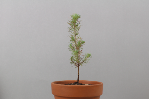 how to plant small tree