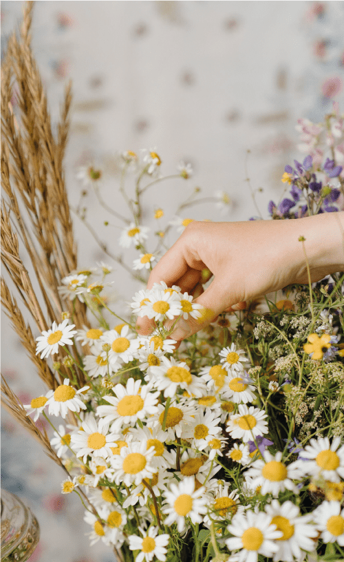 chamomile seed paper planting instructions