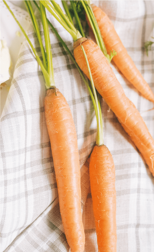 carrot seed paper planting instructions