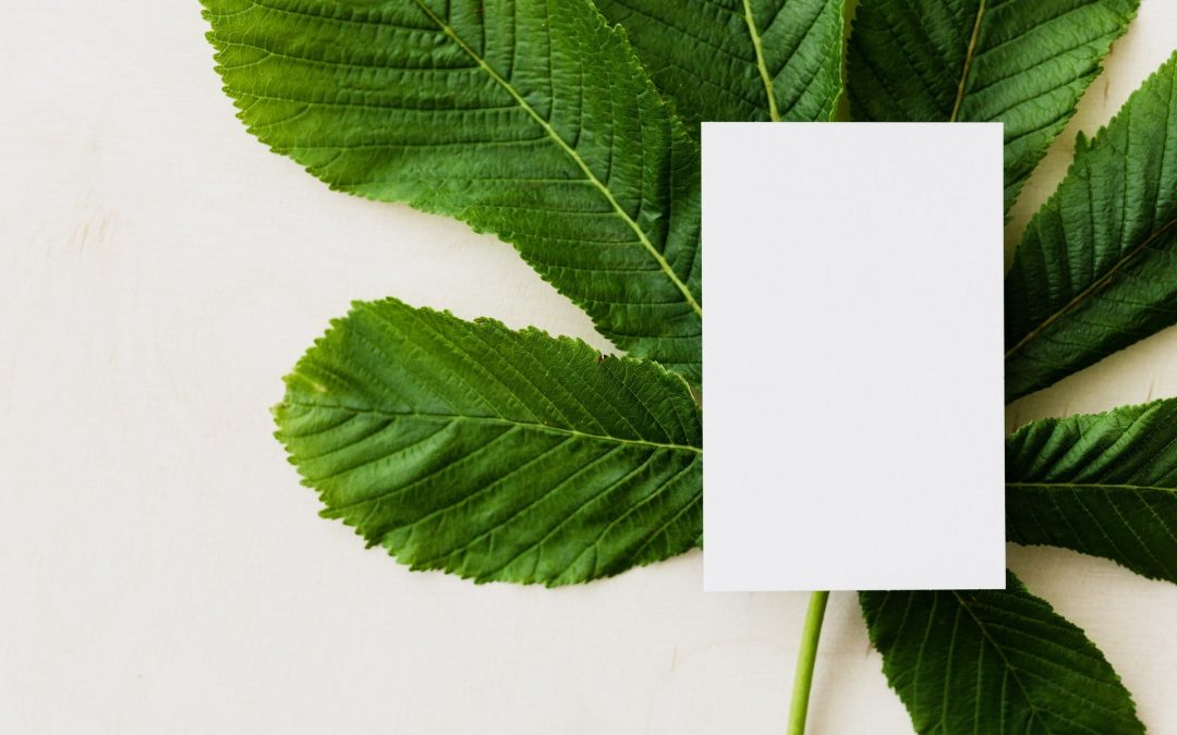 Tipos de tarjetas de visita sostenibles para tu empresa