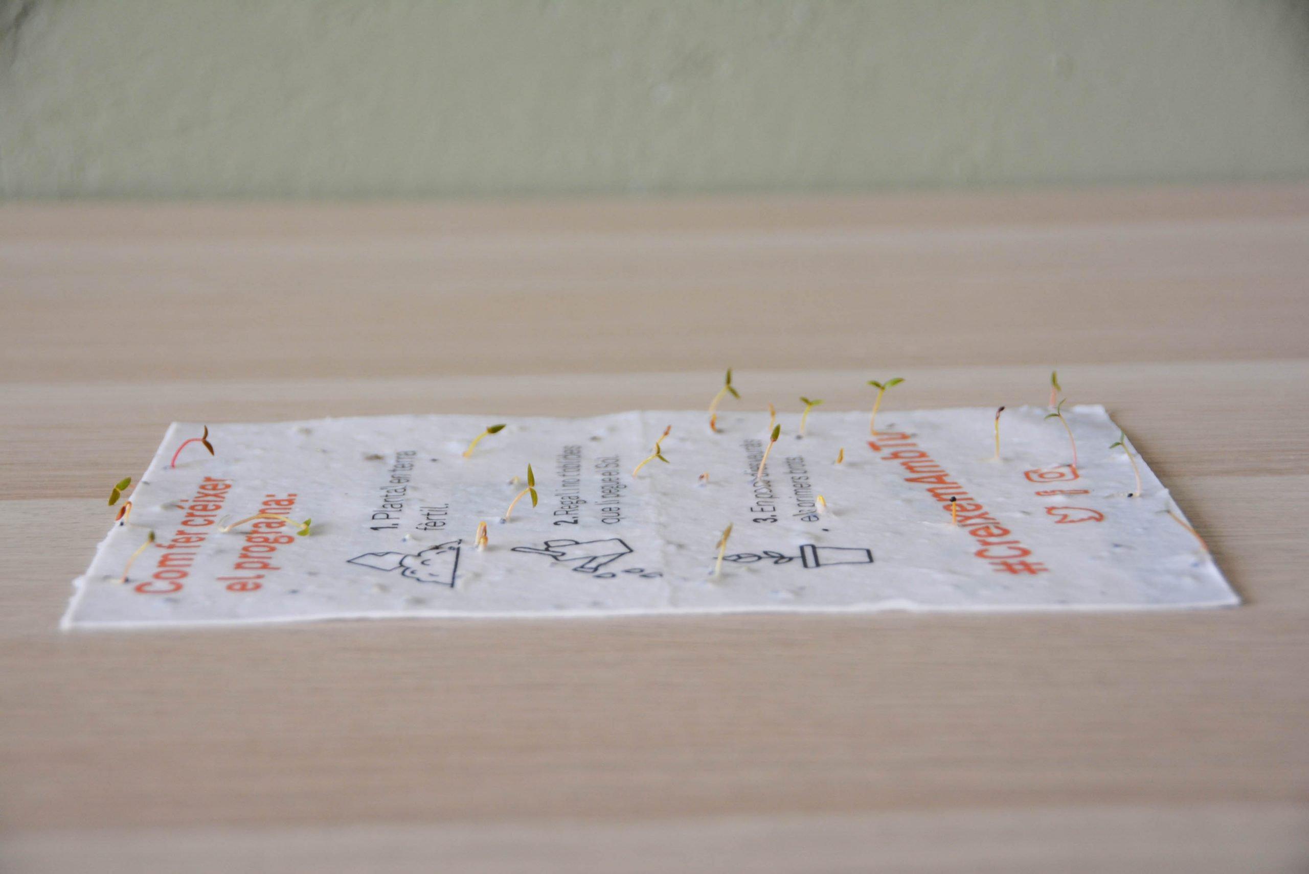 papel con semillas Sheedo Studio